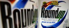 Moms to EPA: Recall Monsanto's Roundup http://www.huffingtonpost.com/ronnie-cummins/moms-to-epa-recall-monsantos-roundup_b_5417927.html