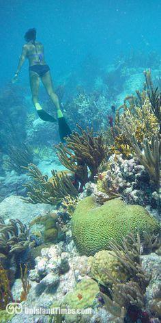 Snorkeling Henley Cay, St John, US Virgin Islands Shell Island, Sand Island, St Thomas Usvi, Best Snorkeling, Southern Caribbean, Us Destinations, Us Virgin Islands, Beautiful Islands, Beautiful Places