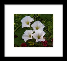 Flowers Framed Print featuring the photograph Moment In Time by Janis Kirstein