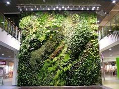Projekt Patrica Blanc'a, znanego botanika, twórcy Vertical Gardens (Galeria Przymorze w Gdańsku)