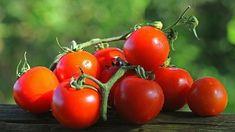 Rajská jablíčka mají mnoho zdravotních benefitů. Polenta, Pickles, Vegetables, Food, Essen, Vegetable Recipes, Meals, Pickle, Yemek