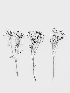 Source by razztro - tatouagede Mini Tattoos, Cute Tattoos, Tatoos, Botanical Art, Botanical Illustration, Illustration Art, Flowers Tatto, Kunst Tattoos, Piercing Tattoo