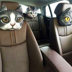 Прикольные автомобильные подушки в виде животных мемов #ПОДУШКА #АВТОМОБИЛЬ #ЖИВОТНЫЕ