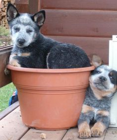 Look at the face of the dog on the right! Toooo cute! *lol*