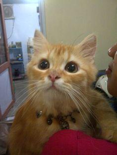 this my cat Avin