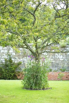 A great idea for sweet peas. Photograph Jake Eastham.