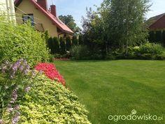 Wizytówka - Any ogrod mały czyli wygrana walka z ugorem - Forum ogrodnicze…