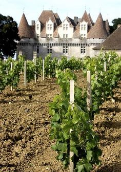 Ideal soils are key to France's diverse wine industry.