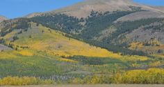Fall color showing on Boreas Pass.