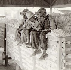:::::::: Vintage Photograph ::::::::: African American children sitting on a farm tractor trailer filled with cotton that they helped pick. ca 1940