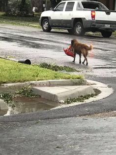 FOX NEWS: Hurricane Harvey: Photo of dog carrying bag of food goes viral