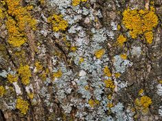Image of 'organic texture - bark with moss'