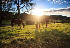 Horses on the Clancy Farm Here you will find (horse racing systems|system for horse racing|Horse racing tools|gamble system for horse racing)