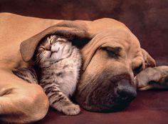 Clementoni Puzzle 500 Teile Katze mit Hund (35020) in Spielzeug, Puzzles & Geduldspiele, Puzzles | eBay