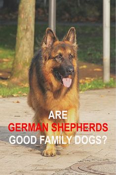 German Shepherds are one on the most popular family breeds in the United States. Find out if they make good Family Dogs. German Shepherds are one on the most popular family breeds in the United States. Find out if they make good Family Dogs. Best Family Dog Breeds, Family Dogs, German Shepherd Puppies, German Shepherds, Gaurd Dogs, Best Guard Dogs, Best Dogs For Families, Dog Facts, Different Dogs