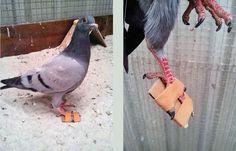 De Bonte Piet meet duif een schoen aan | Medemblik Actueel