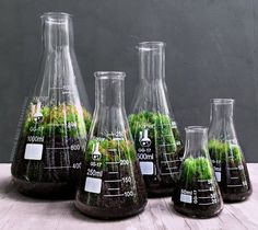 Chemistry Terrarium Gift Set with Indoor Plants in Glass Science Flasks More