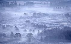 A sound, almost a recall of Nature, captured during a winter misty morning in Adda River Natural Park (northern Italy)