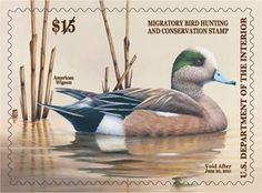 2010-2011 Federal Duck Stamp. Robert Bealle has been a life long resident of Maryland and still resides on the farm where he was born and raised. His entire life has revolved around the outdoors, and has instilled a respect for wildlife and the land. Starting out as a professional taxidermist, after several years this business lead him into a successful career in wildlife art.