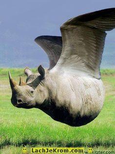 LachJeKrom.com - Dieren - Speciale dieren: