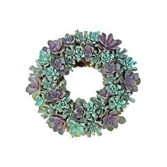 A mixture of live green and purple echeveria is woven together to create a beautiful succulent plant wreaththat can be hung on your door or placed in the middle of a table for a gorgeous centerpiece. ...  Find the Botanical Garden Living Wreath, as seen in the Gifts for Her Collection at http://dotandbo.com/collections/holiday-gift-guide-gifts-for-her?utm_source=pinterest&utm_medium=organic&db_sku=96934