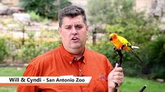 SA Goes Orange - San Antonio Zoo www.sagoesorange.org #sagoesorange #hungeractionmonth