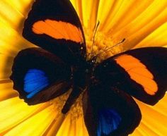 Today is a day of great beauty, it surrounds us yet all we do is to take time to explore it and enjoy it. The next time you see a butterfly take a picture of it and share it with a friend...it will make them smile.