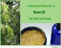 From hair growth to dandruff, neem oil is the nature& cure for your scalp and hair problems. Neem oil is packed with antioxidants which help prevent hair loss Coconut Oil Hair Treatment, Coconut Oil Hair Growth, Coconut Oil Hair Mask, Coconut Oil For Skin, Hair Growth Oil, Neem Oil For Hair, Oil For Curly Hair, Hair Oil, Hair Mask For Dandruff