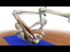 Stretching the Piriformis Protecting the knee in reverse pigeon pose. - YouTube