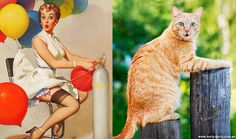 Cats That Look Like Pin Up Girls! New favorite tumblr!