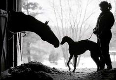 Greyhound and Horse