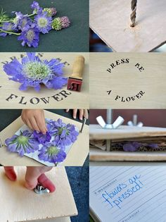 Whether your first spring blooms are about to appear, or the late summer flowers are near their end, preserving your garden's beauty can be a fun activity for any child. A home-made flower press is fun to make and can be used forever.