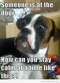 Funny dog quote with image 2014 2015