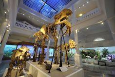 Top 3 cele mai vizitate muzee din România