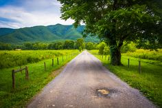 Cades Cove is definitely a must-stop when you drive into the Great Smoky Mountains National Park