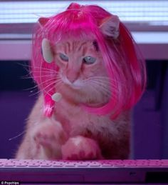 Puss in wigs: The kitties all sport colourful wigs as Katy And The Popcats take on the villainous Fat Cat
