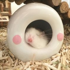 Sweet dreams are made of these   @fluffieland  #hamster #hamstergram #roborovski #piedroborovski #cute by maqaroon