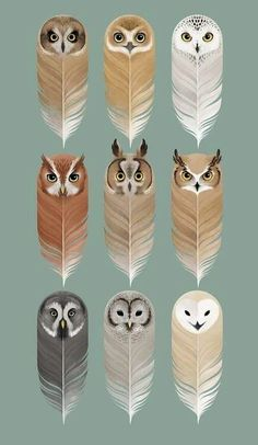 35 trendy ideas for tattoo cute owl birds Bird Kite, Owl Bird, Feather Painting, Feather Art, Owl Pictures, Owl Always Love You, Beautiful Owl, Feather Crafts, Owl Crafts