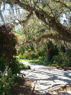 Hampton Park Charleston