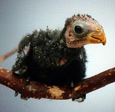 Baby Animals So Ugly They�re Cute � 30 Pics