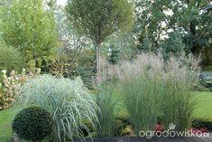 Ogród z lustrem Beautiful Flowers Garden, Herbs, Plants, Herb, Plant, Planets, Medicinal Plants