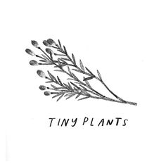 February 12 :: Tiny Plants by Rebecca Green