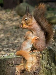 Pets Care - So sweet.mama and baby each enjoying their meal! The way cats and dogs eat is related to their animal behavior and their different domestication process. Cute Squirrel, Baby Squirrel, Squirrels, Squirrel Pictures, Cute Animal Pictures, Nature Animals, Animals And Pets, Cute Baby Animals, Funny Animals