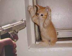 Mejores Videos Gatos graciosos en Internet