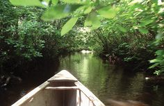 Canoe in NJ Pine Barrens