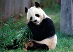 По следам Аватара (Пекин-Чжанцзяцзе-Пекин, 7 дней/6 ночей, индивидуальный тур)