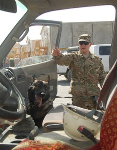Military Working Dogs search vehicles at AFSB August 25 Military Working Dogs, Military Dogs, Police Dogs, Military Service, Brave Animals, Dog Soldiers, French Dogs, Animal Tails, Puppy Classes