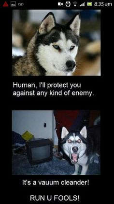 This is definately Shiver, the vacume makes her crazy...Husky dog meme #BIONIChumor www.bionicplay.com