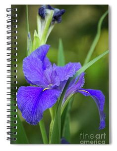 """This x spiral notebook features the artwork """"Purple Beauty"""" by Michelle Tinger on the cover and includes 120 lined pages for your notes and greatest thoughts. Notebooks For Sale, Flower Images, Fine Art America, Artists, Group, Inspired, Purple, Friends, Amazing"""