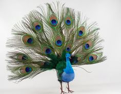 """Is it wrong that I want to decorate my house around this peacock?!?! LOL ~~Artificial Birds 16"""" Peacock Open Fan $14 each / 2 for $12 each"""